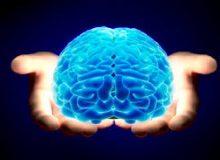 Inmortalidad cerebral