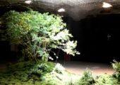 Bajo tierra